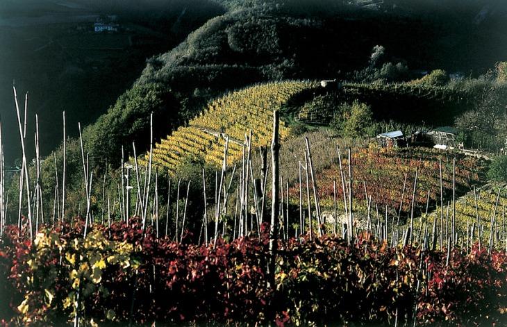 Vigne di Freisa d'autunno