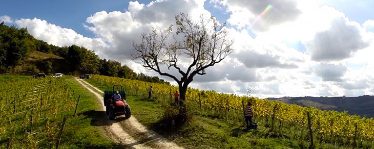 Terreni vitati dell'Azienda Vinica