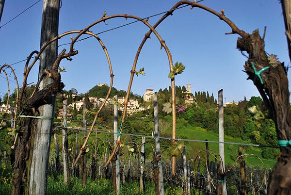 Veduta di Asolo dalle vigne