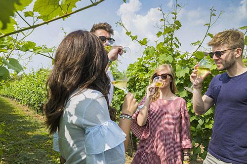 Enoturisti nelle vigne della Franciacorta