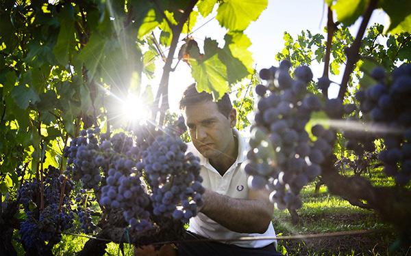 Damiano Ciolli, viticultore Fivi nel Lazio