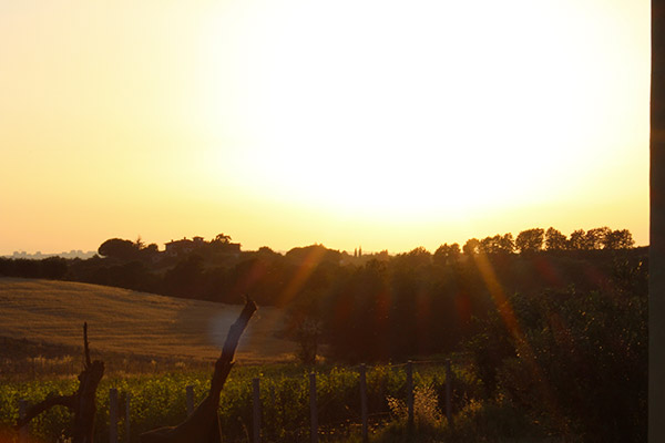 L'azienda vinicola Buresta Marco Vinicio al tramonto