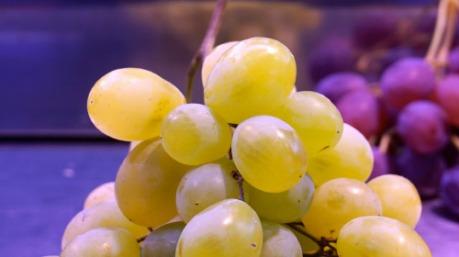 Uva di Moscato