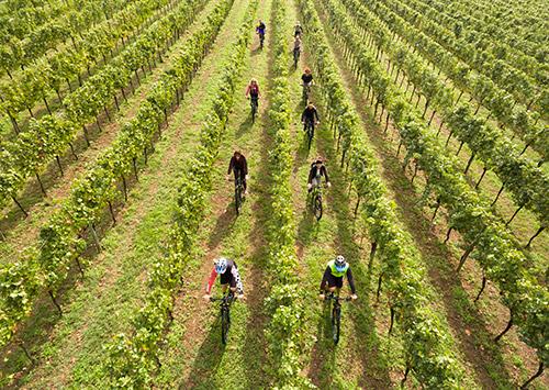 In bici tra le vigne della Franciacorta