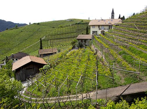 Scorcio di vigne in montagna