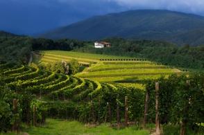 Le vigne dell'azienda Zorzettig